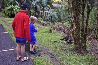 Costa Rica Tabacon breakfast walk with wildlife