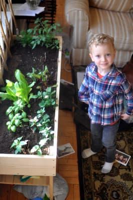 Fe indoor garden-4