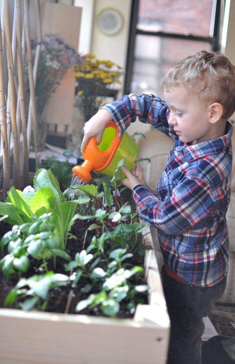 Fe indoor garden