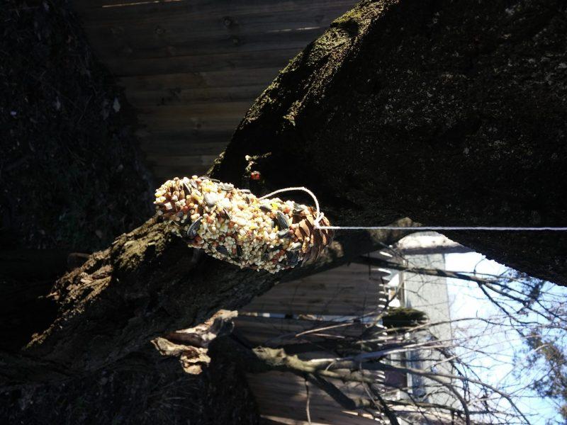 homemade bird feeder |Gimme the Good Stuff